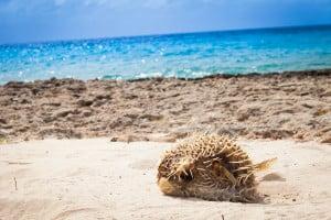 Fauna Klein Curacao